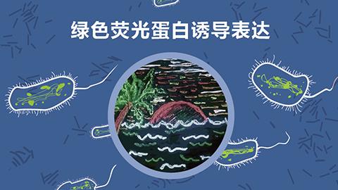 绿色荧光蛋白诱导表达